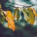 伤春悲秋,为什么秋季是抑郁高发期图片路径
