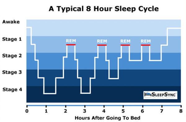 睡眠周期.png.jpg