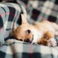 当狗狗注视你时,它在想些啥?图片路径