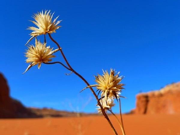 desert-82403__340.jpg